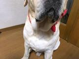 IMG_5210 blog.jpg